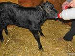 Сухое молоко Заменитель цельного молока для животных - фото 4