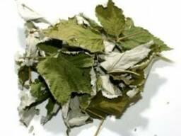 Сушенный лист лещины