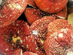 Сушеный гриб мухомор красный (Amanita Muscaria)