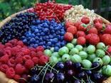 Услуги по сушке ягод и грибов - фото 1