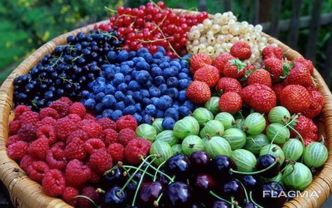 Услуги по сушке ягод и грибов