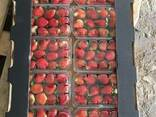 Свежая клубника Fresh Strawberry - фото 2