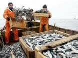 Свежая рыба оптом