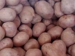 Свежайшие овощи и фрукты с доставкой по Запорожью.
