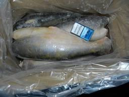 Свежемороженая морская рыба
