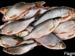 Свежемороженая речная рыба