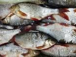 Свежемороженная и охлажденная речная рыба - фото 5