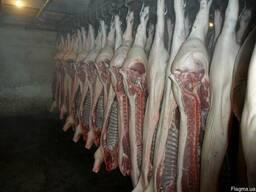 Свинина в полутушах EU 37 1 категория Польша