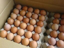 Тара для яиц картонная