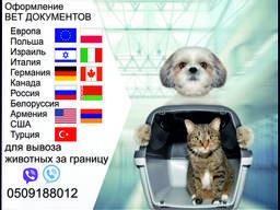 Тест на бешенство Справка собаки выезд за границу Официально