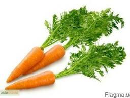 Торгова компанія шукає оптового постачальника моркви