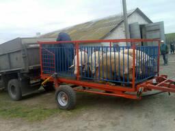 Тракторный прицеп для погрузки животных ТС-3 для. ..