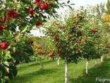 Травосмесь для озеленения садов, парков, шоссейных дорог - фото 1