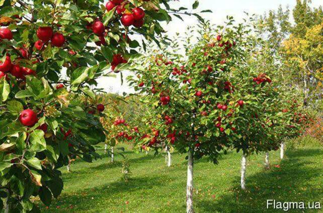 Травосмесь для озеленения садов, парков, шоссейных дорог