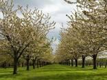 Травосмесь для озеленения садов, парков, шоссейных дорог - фото 6