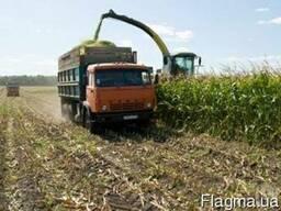 Требуются зерновозы?