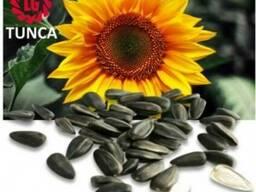 Тунка - насіння соняшника Лімагрейн.