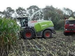Услуги силосоуборочной техники уборка кукурузы на силос сена