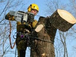 Спил деревьев, Распил, Кронирование, Уборка территорий, Распланировка участков