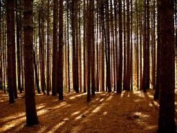 Участок 11. 5475 Га пгт Козин под коттеджный городок лес