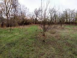Участок у реки Днепр Прохоровка Каневский лес