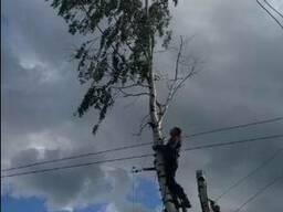 Удаление больших деревьев, санитарная обрезка деревьев