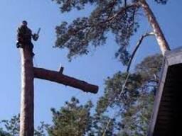 Удаление деревьев, планировка участка, демонтаж домов