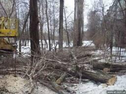 Удаление деревьев, вырубка кустарников, частичная обрезка