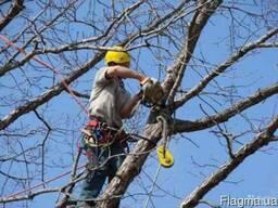 Удаление деревьев Киев. Кронирование деревьев