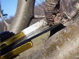 Удаление, обрезка, спил деревьев. Расчистка территории