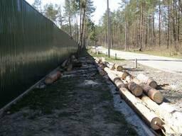 Удаление спил деревьев Киев. Чистка деревьев