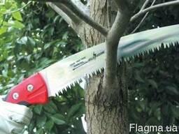 Уход за деревьями сада, обрезка, обработка, защита деревьев.