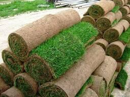 Укладка газона в Киеве и Киевской области
