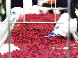 Услуга по шоковой заморозке плодов ягод и овощей.