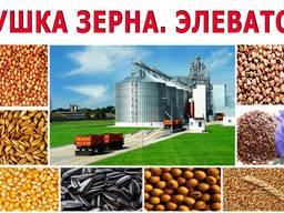 Услуги сушки зерна. Сушка кукурузы. Сушка семечки