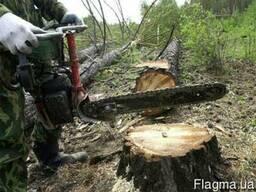 Услуги по спиливанию деревьев, корчевание пней