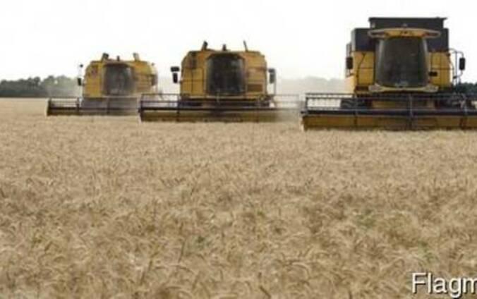 Услуги по уборке урожая комбайнами зерновых подсолнечника со