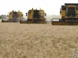Услуги по уборке урожая комбайнами зерновых подсолнечника со - photo 1