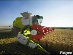 Услуги по уборке зерновых пшеницы рапса подсолнуха кукурузы