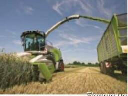 Услуги уборки силоса, уборка кукурузы на силос, услуги силос