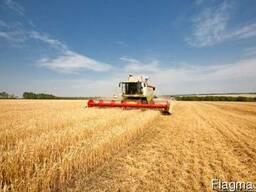 Услуги уборки урожая комбайнами зерновых сои кукурузы
