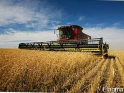 Услуги уборки урожая зерновых комбайнами, аренда комбайнов