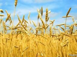 Услуги зернового брокера