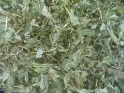 Вахта листя , бобівник листя , трифоль листя