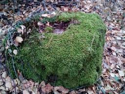 Валун з натурального каменю з мохом