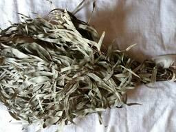 Веник эвкалиптовый для бани