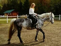 Верховая езда , конные прогулки, пони -клубе. 15 мин. от Киев