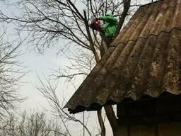 Весенняя обрезка плодовых деревьев Киев.