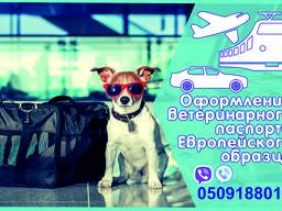 Ветеринарная справка форма 1 Справка на титры, ветеринарный