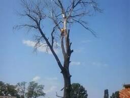 Видалення, спил дерев, розчищення ділянки демонтаж